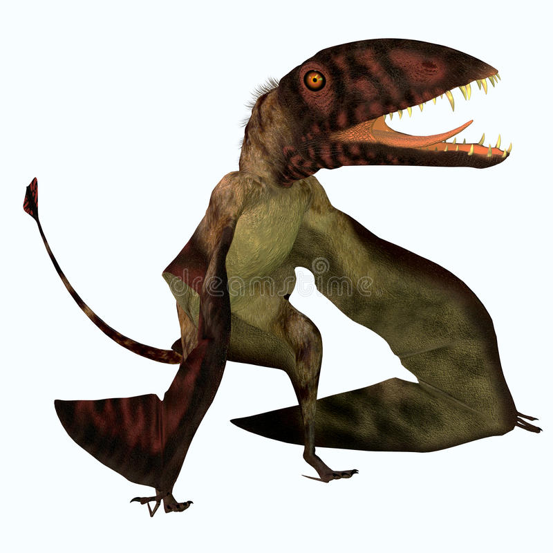 Dimorphodon Pterosaur libre illustration