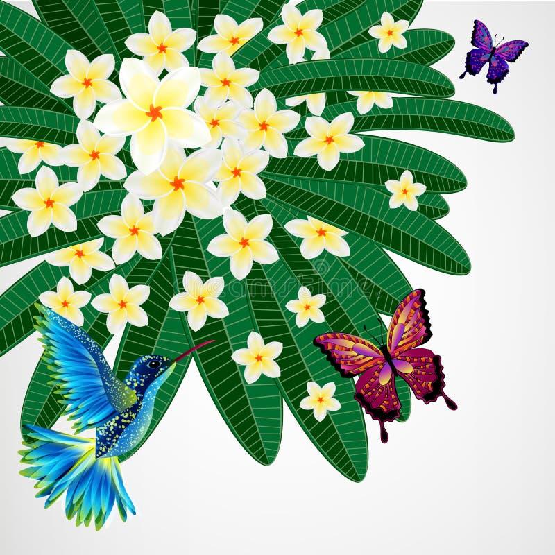din blom- illustration för bakgrundsdesign Plumeria blommar med fåglar, butterfli royaltyfri illustrationer