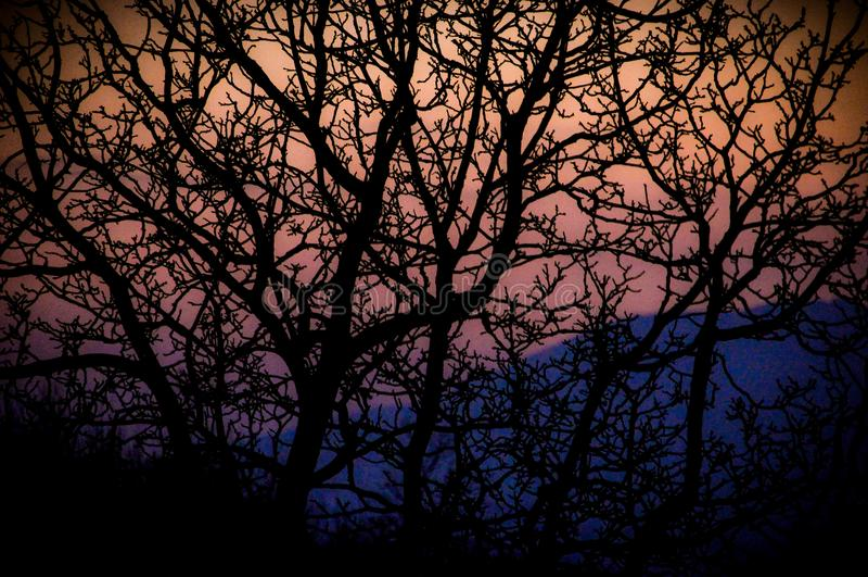 dina trees för avståndssolnedgångtext royaltyfri bild