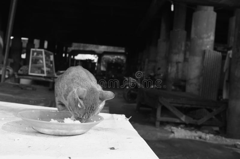 Diner le chat photographie stock