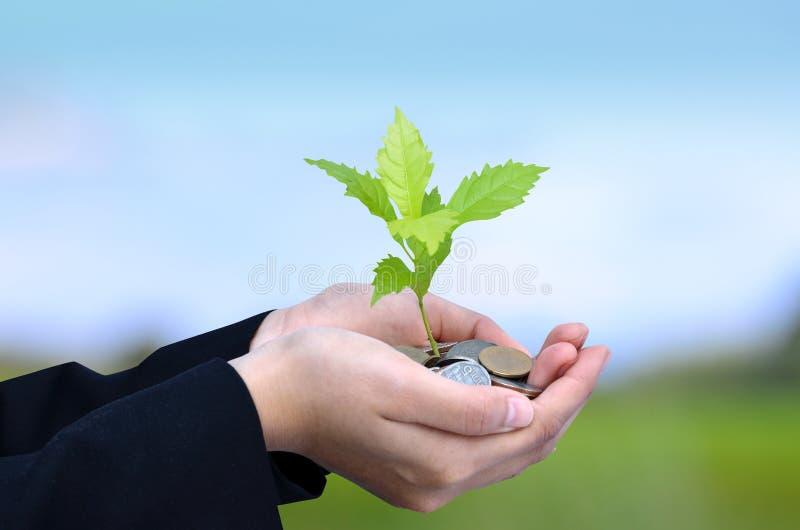 Dinero, árbol, monedas, concepto cada vez mayor del negocio imagen de archivo