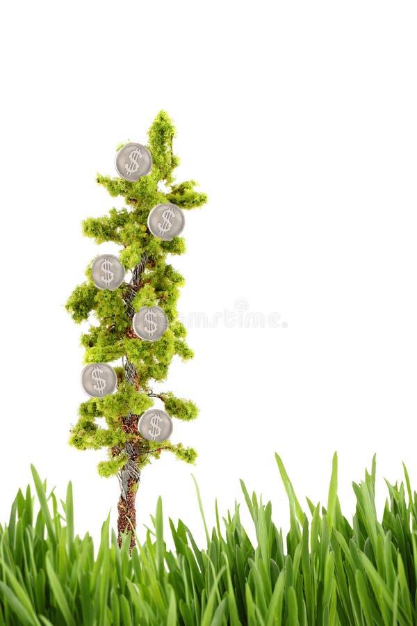 Dinero que crece en árbol con la hierba verde fotos de archivo libres de regalías