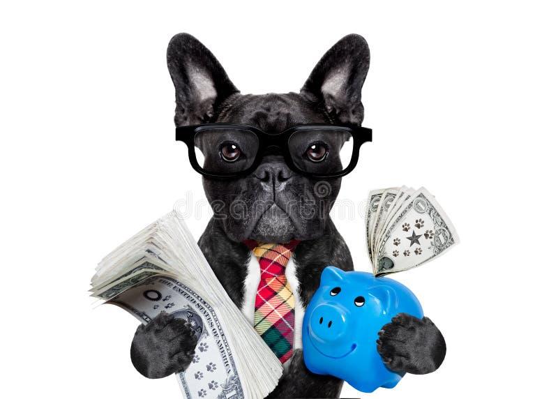 Dinero y hucha del perro imagen de archivo