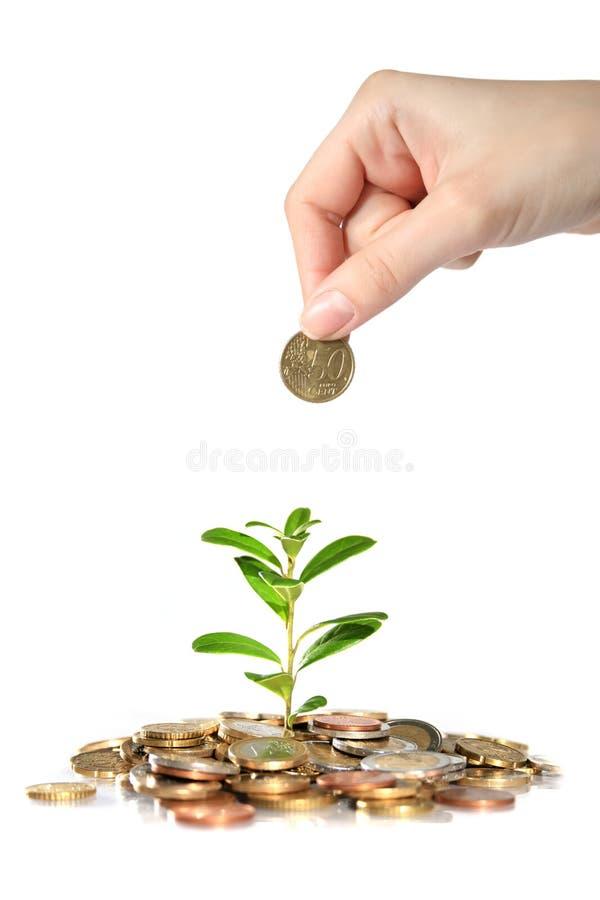 Dinero y planta. foto de archivo libre de regalías