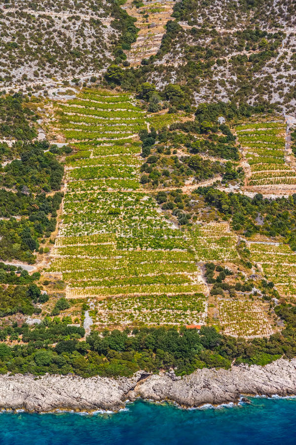 Download Dingac Vineyards On Peljesac Peninsula Stock Photo - Image: 33197552