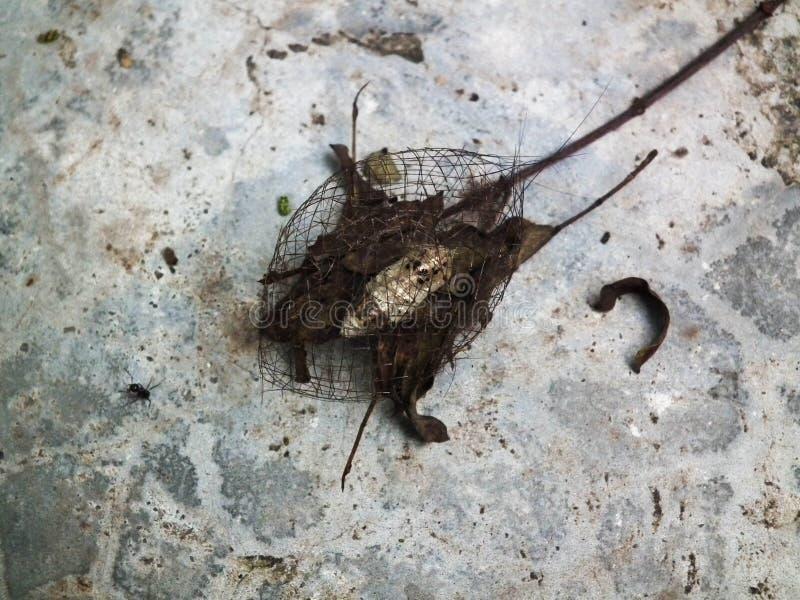 Dinglar den lilla sköldpaddsskalet för puppan skogen arkivbilder