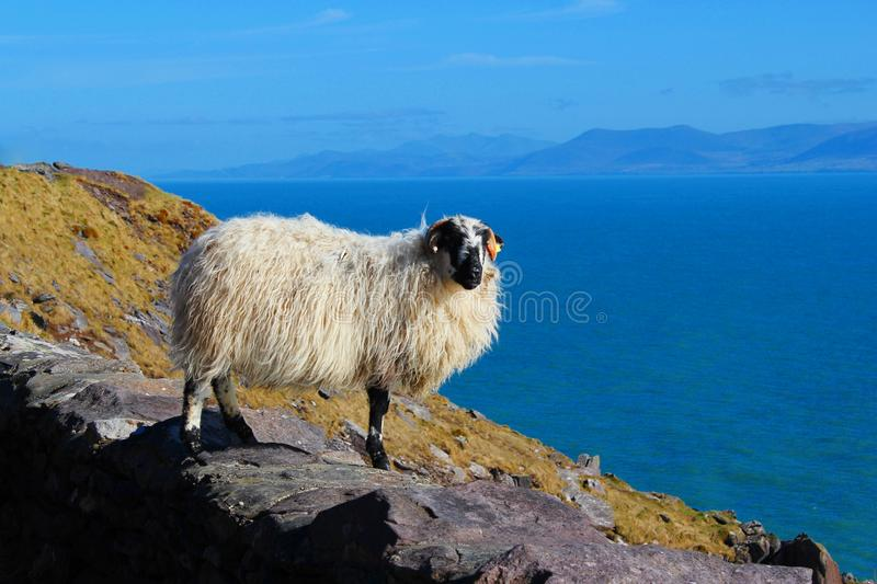 Dingle. Ireland clouds tour guide view irish mountain ocean atlantic sheep scenery royalty free stock photography