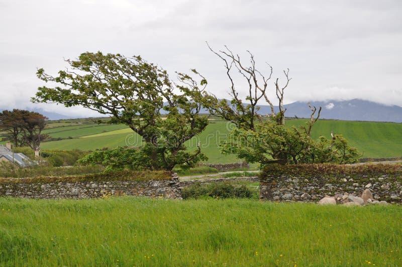 Dingle, Provincie Kerry, Ierland royalty-vrije stock fotografie