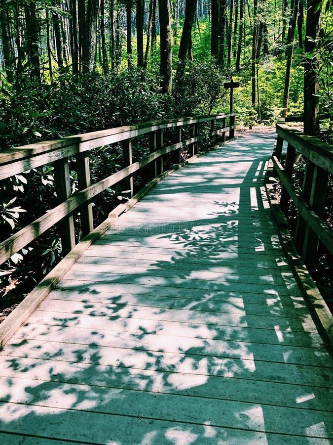 Dingmans tombe promenade par le bois photographie stock libre de droits