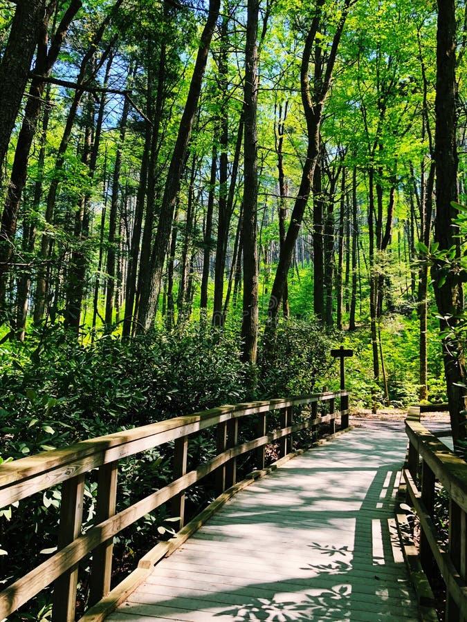 Dingmans tombe promenade par le bois photos libres de droits