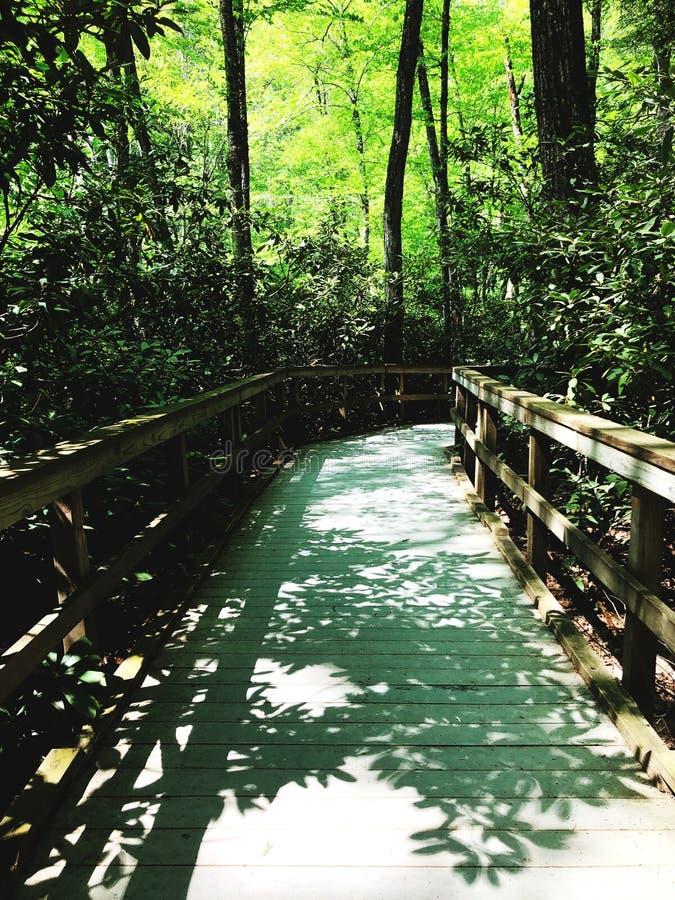 Dingmans tombe promenade par le bois images libres de droits