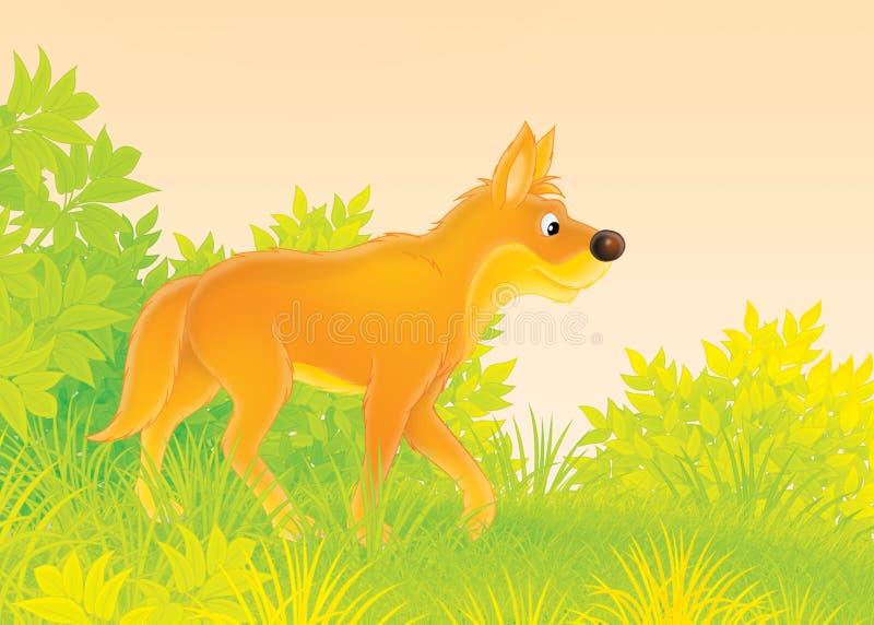 Dingo απεικόνιση αποθεμάτων