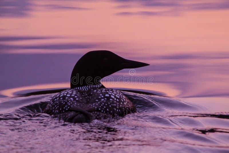 Dingue au coucher du soleil. photos libres de droits
