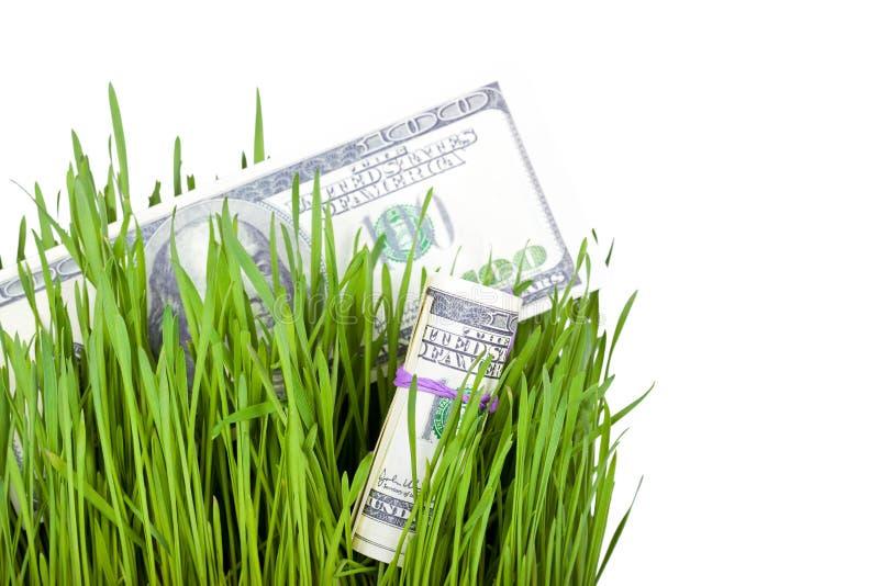Dinheiro crescente na grama fotos de stock