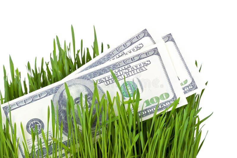 Dinheiro crescente na grama foto de stock royalty free