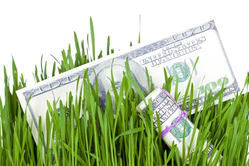 Dinheiro crescente na grama imagens de stock royalty free