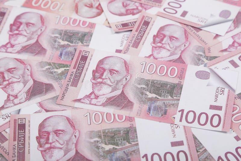 Dinheiro e conceito das finanças Mil cédulas sérvios da moeda nacional da conta do dinar fotografia de stock royalty free