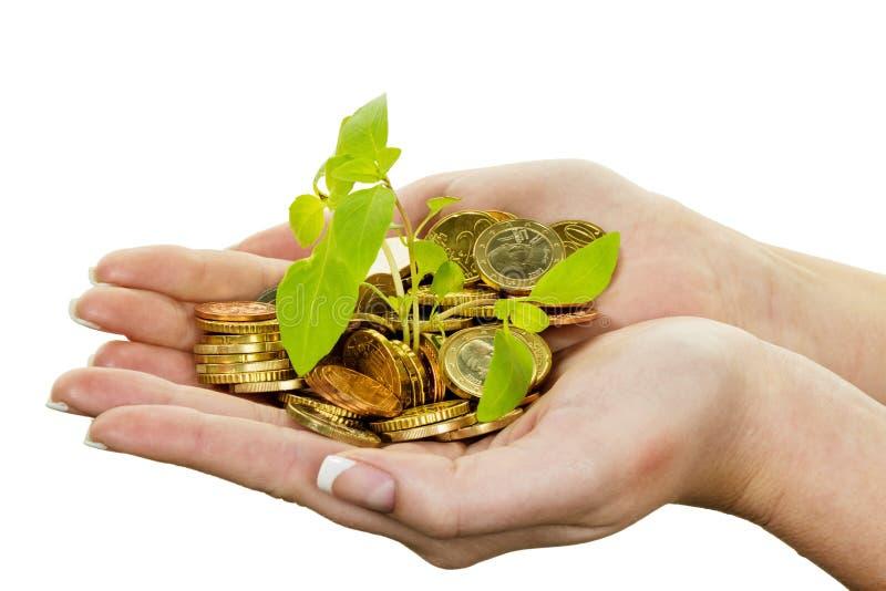 Dinheiro e planta. economias da foto do símbolo imagem de stock
