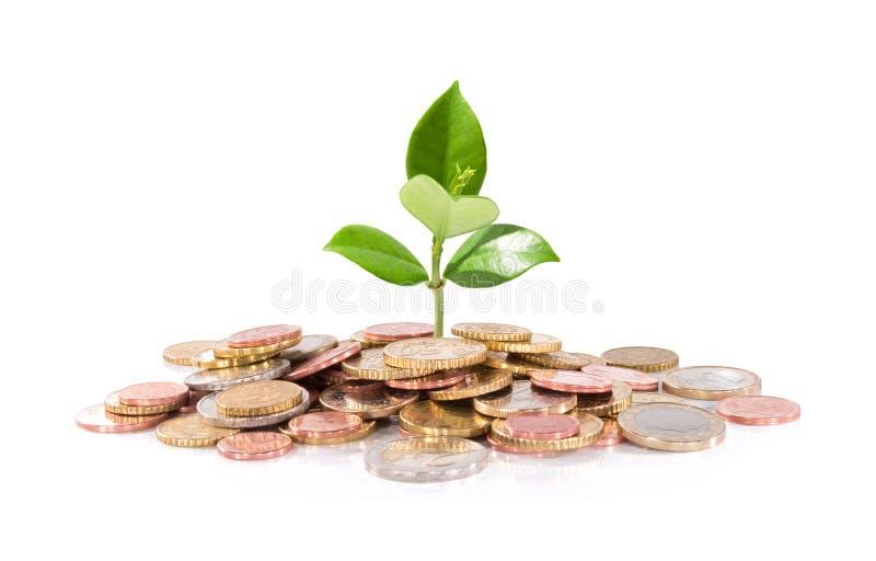 Dinheiro e planta - negócio novo da finança fotos de stock royalty free