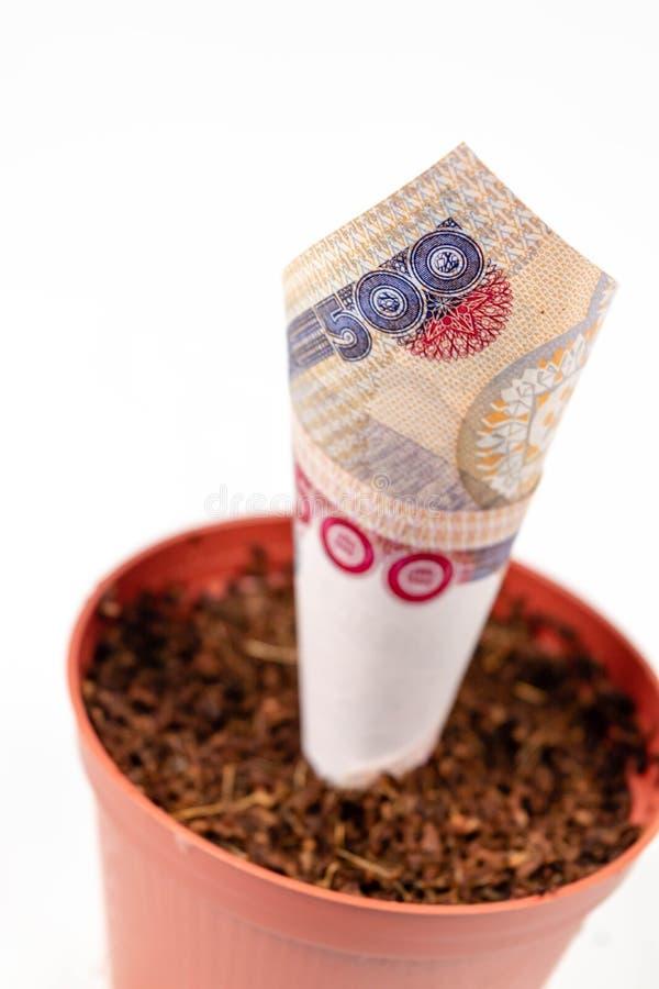 Dinheiro nigeriano Cinco cem notas do naira em uns potenciômetros de flor para o conceito do investimento financeiro e das econom imagens de stock royalty free
