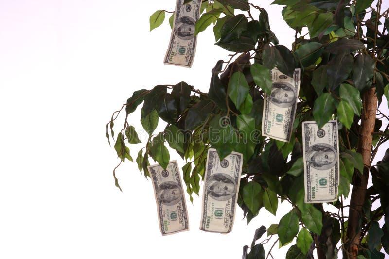 Dinheiro que cresce em uma árvore foto de stock royalty free
