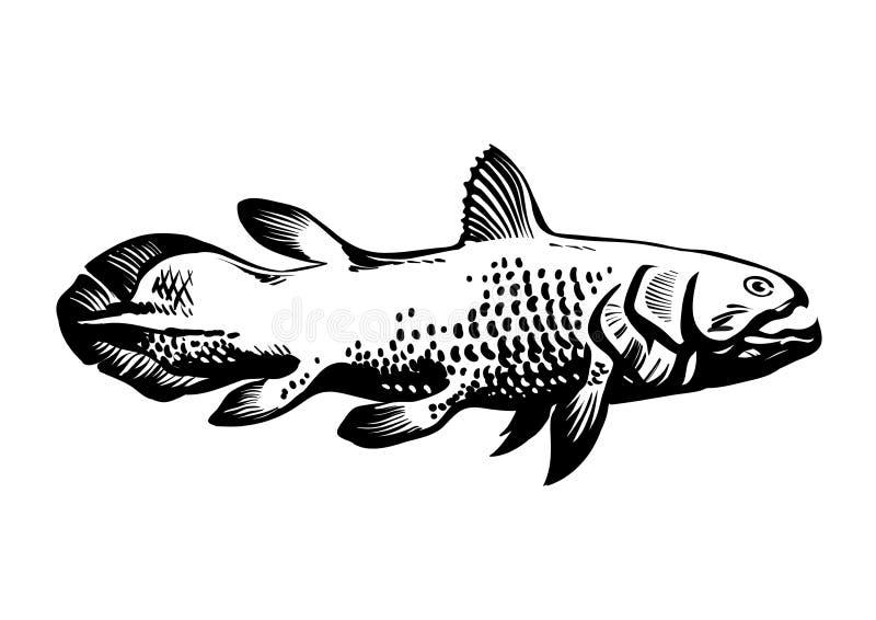 Dinichthys,史前鱼 耳垂有鳍的鱼, Sarcopterygii, Coelacanth 手拉的葡萄酒被刻记的传染媒介 库存例证