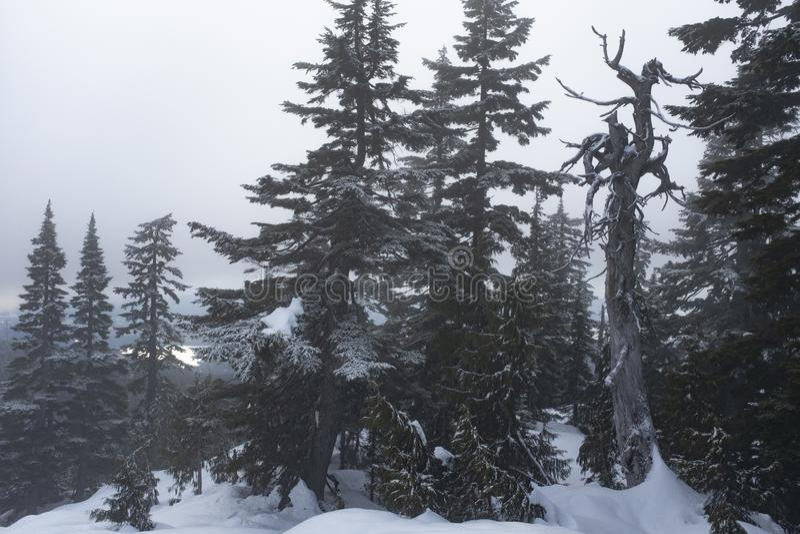 Dinky szczyt w mgle na Mt Seymour, BC obraz stock