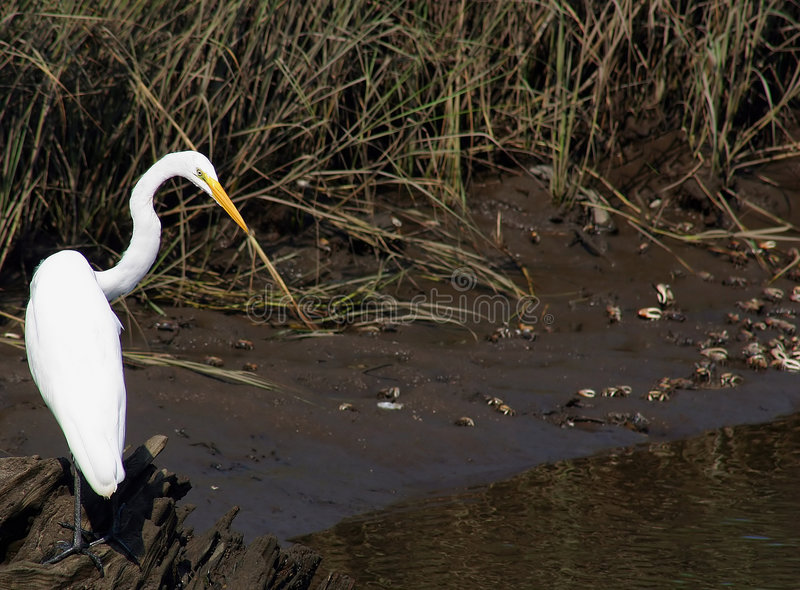 Download Dinner Time! stock image. Image of heron, food, fowl, feeding - 180585