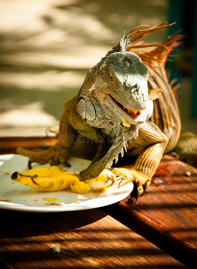 Dinner Time Royalty Free Stock Photos