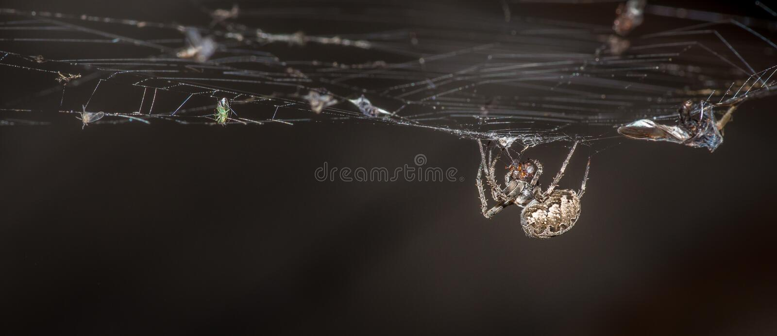 Dinner in the web royalty free stock photo