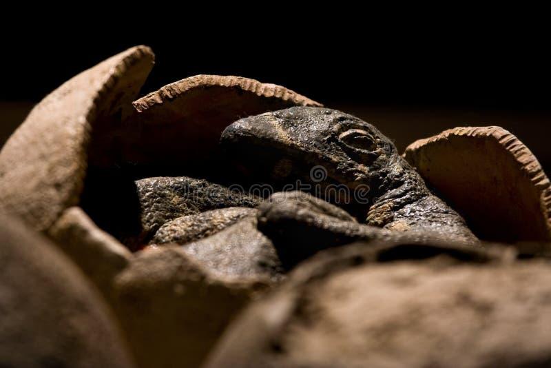 Dino λίγα στοκ φωτογραφία με δικαίωμα ελεύθερης χρήσης