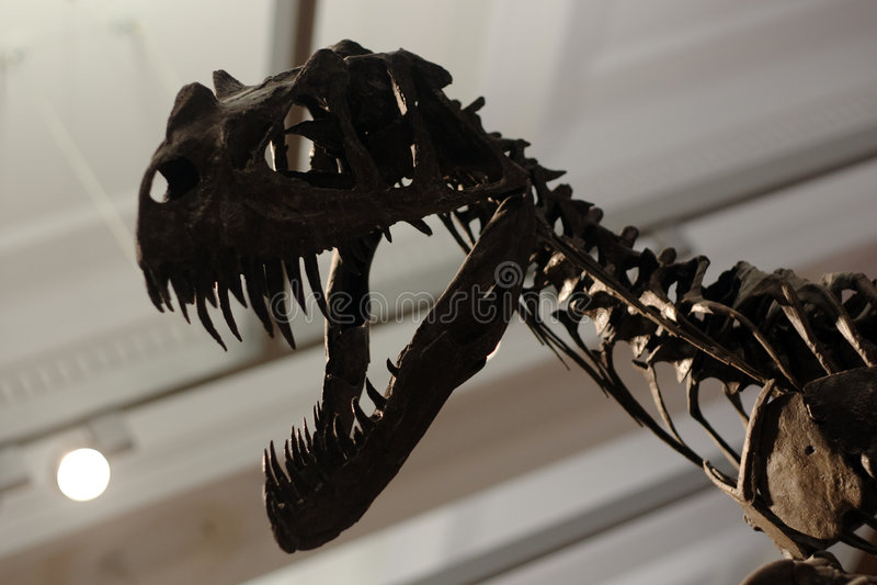 Dino στοκ εικόνα