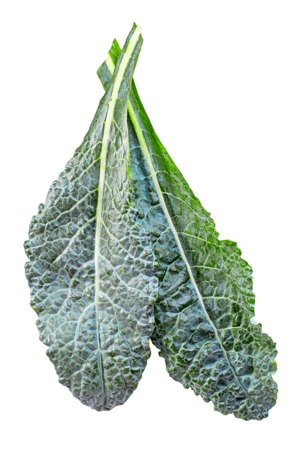 Dino Kale που απομονώνεται στοκ εικόνες με δικαίωμα ελεύθερης χρήσης