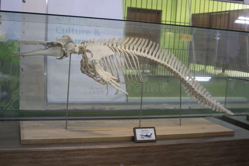 Dino-Skelett stockfoto