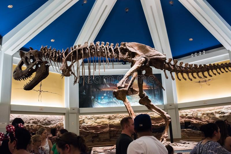 DinoLand U S a au règne animal chez Walt Disney World photos libres de droits