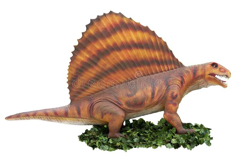 A dinosaur in an aggressive pose. A dinosaur Stegosaurus in an aggressive pose is isolated on a white background on a pedestal of green grass stock images
