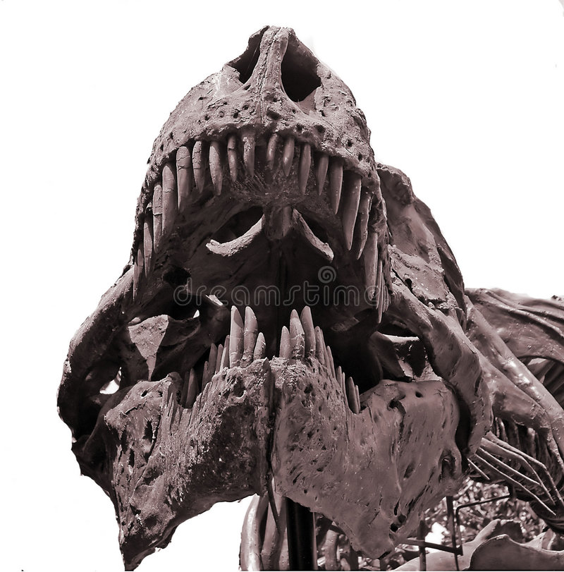 Download Dinosaur bones stock image. Image of prehistoric, dangerous - 4793