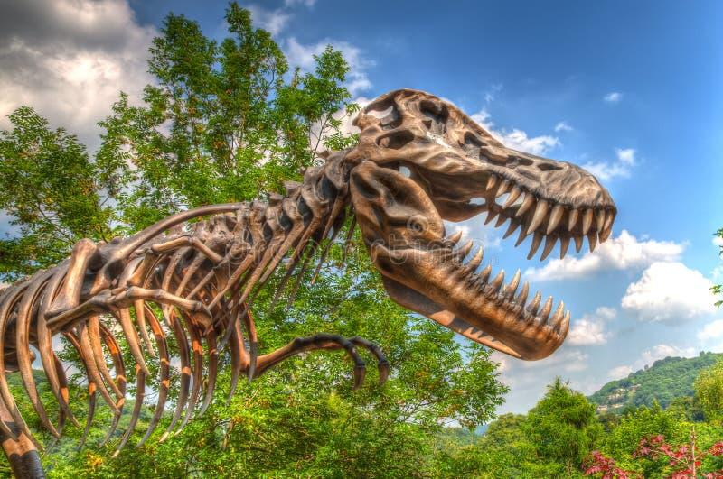Dinosaur bones royalty free stock images