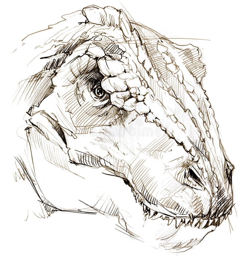 Dinosaur drawing pencil sketch stock illustration illustration of animals illustration