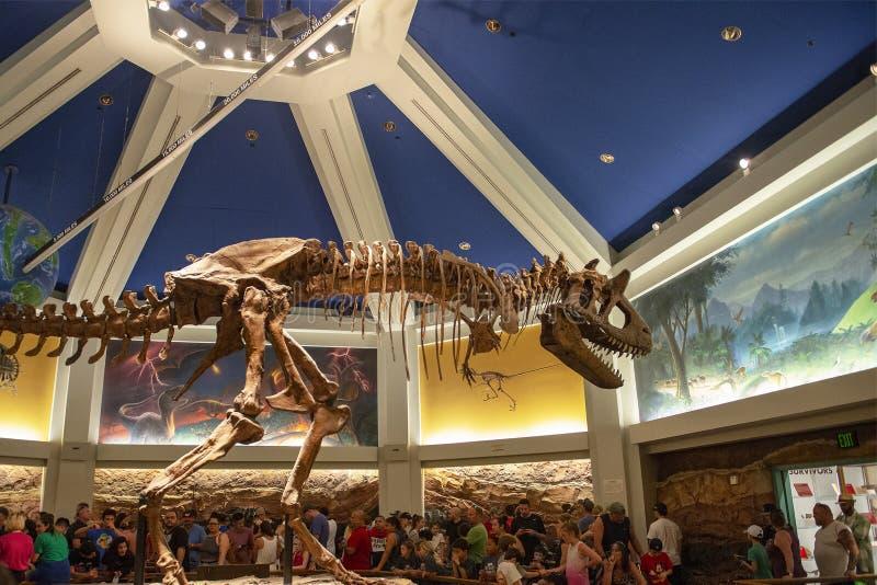 Dinosaur, Disney World, Travel, Animal Kingdom. Dinosaur ride in the Animal Kingdom at Walt Disney World outside of Orlando, FL. Florida is a popular travel stock photo