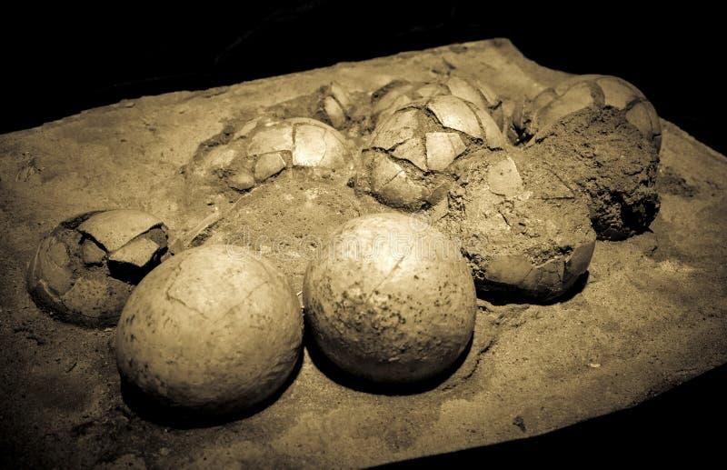 Dinosaur eggs in the nest. Hadrosaurus royalty free stock images