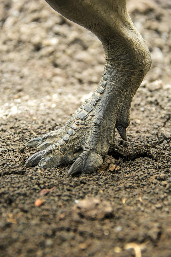Dinosaur feet walking. Of Tyrannosaurus T-rex on the ground in late Cretaceous royalty free stock photography