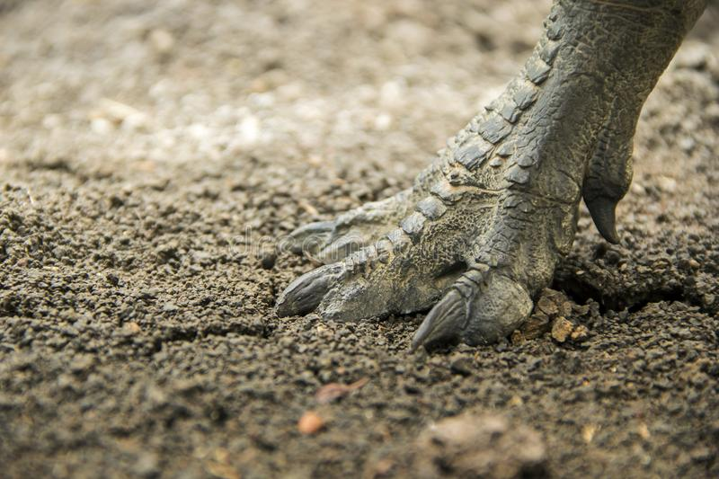 Dinosaur feet walking. Of Tyrannosaurus T-rex on the ground in late Cretaceous stock image