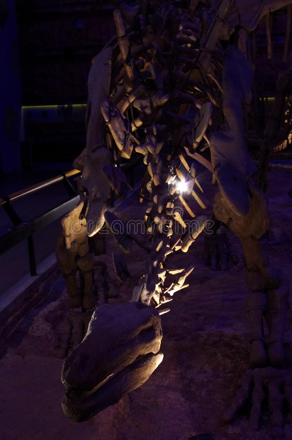Dinosaur Fossils stock photos