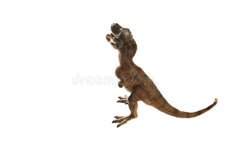 Dinosaur. Isolated dinosaur on write background stock photos