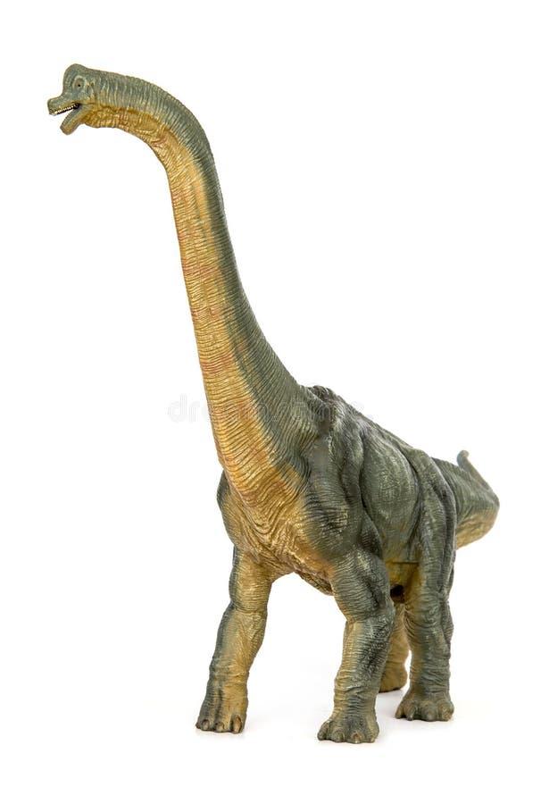 Dinosaur long necked sauropod diermibot breed name Brachiosaurus. A dinosaur eating plants in the Jurassic era. isolated on white background royalty free stock photos