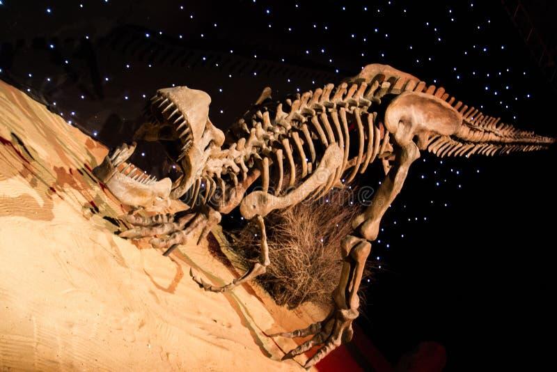 Dinosaur. Prehistoric wild death skeleton danger large scary strength science dangerous south strong dusk sharp fear dawn dinosaur royalty free stock photo