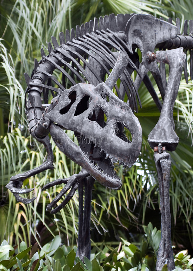 Dinosaur Skeleton. A dinosaur skeleton on display at a museum royalty free stock photography