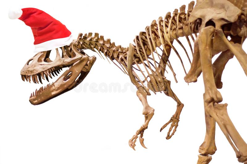 Dinosaur skeleton with Christmas hat on white isolated background stock photos