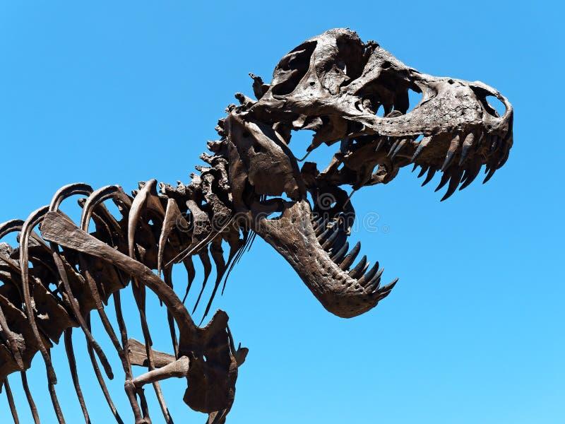 Dinosaur skeleton head against clear sky. Dinosaur skeleton head against blue clear sky stock photo